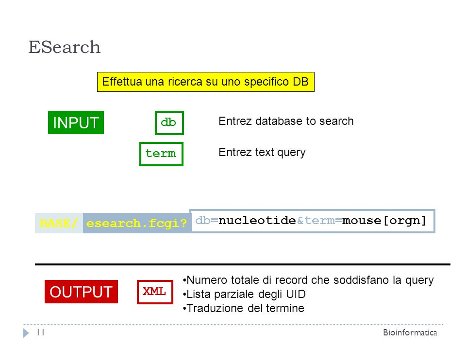 ESearch INPUT OUTPUT db term db=nucleotide&term=mouse[orgn] BASE/